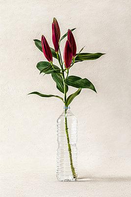 Flowers in a plastic bottle - p943m2150226 by Do-It-Studios