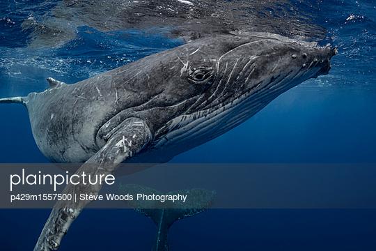 p429m1557500 von Steve Woods Photography