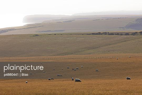 Schafe - p4880441 von Bias