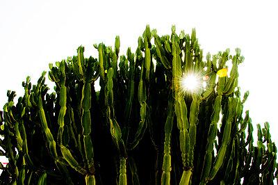 Cactus - p1523m2082444 by Nic Fey