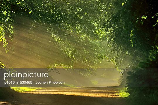 Waldweg im Sonnenschein - p1016m1539468 von Jochen Knobloch