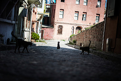 Stray cats - p1007m959906 by Tilby Vattard