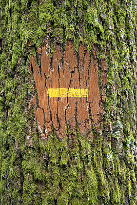 Tree trunk with marking  - p265m1043302 by Oote Boe