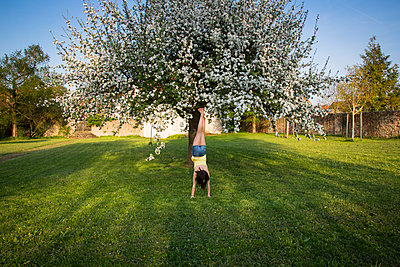 Back view of girl doing handstand in garden in front of blossoming apple tree - p300m1587297 von Larissa Veronesi