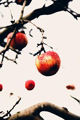 Apfelbaum - p318m763089 von Christoph Eberle