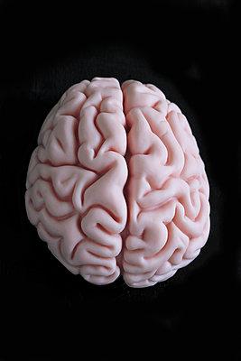 Human brain - p450m1030694 by Hanka Steidle