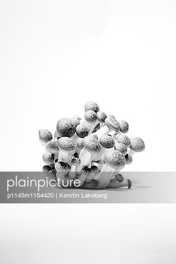 Pilze - p1145m1154420 von Kerstin Lakeberg