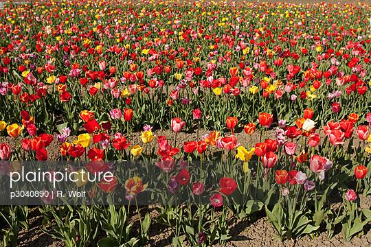 Garden Center - p3040890 by R. Wolf