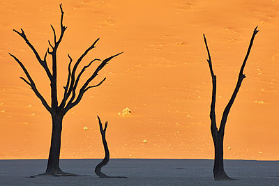 Bare trees in front of a sand dune. - p1100m1489993 by Mint Images