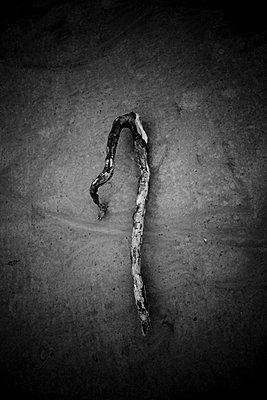 Treibholz im Sand - p248m916297 von BY