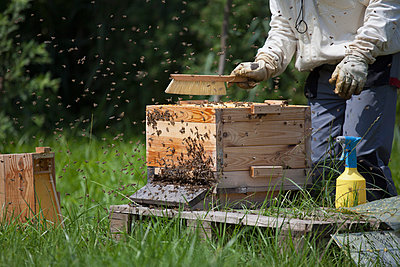 Midsection of beekeeper brushing bees from hive at farm - p301m1070128f by Halfdark
