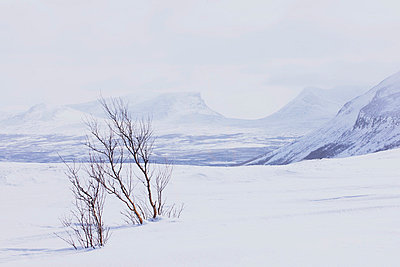 Winter landscape - p312m714741 by Bruno Ehrs