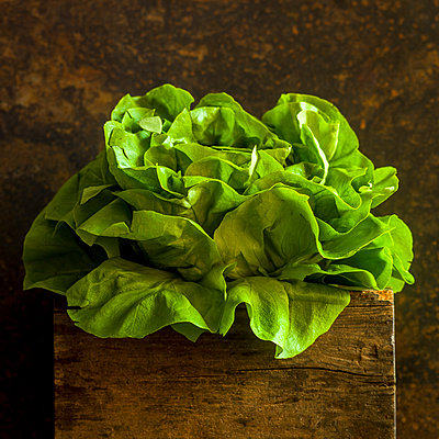 Fresh cabbage lettuce - p813m1222303 by B.Jaubert