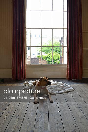 Staffordshire Terrier - p1121m1574875 von Gail Symes