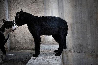Quarrelling cats - p1007m959847 by Tilby Vattard