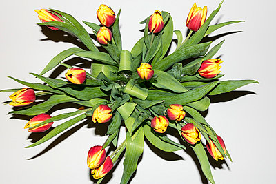 Tulpenstrauß - p105m788167 von André Schuster