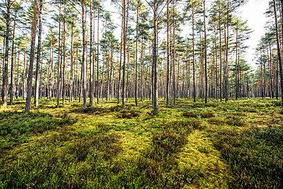 Wald - p947m945791 von Cristopher Civitillo