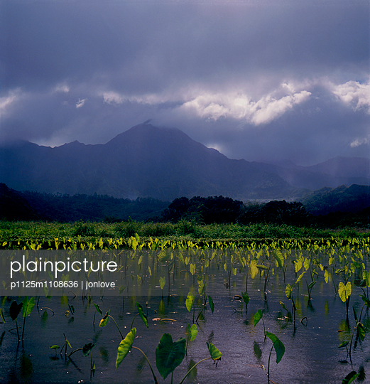 Mountain with Water lilies - p1125m1108636 by jonlove