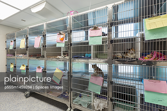 Kitten sitting in cages at animal shelter - p555m1459284 by Spaces Images