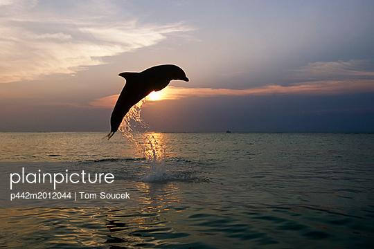 p442m2012044 von Tom Soucek