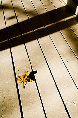 Leaf on Front Porch - p5551138f by LOOK Photography