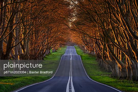 p871m2023394 von Baxter Bradford