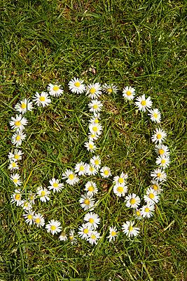 Gänseblümchen-Peacezeichen - p045m1462905 von Jasmin Sander
