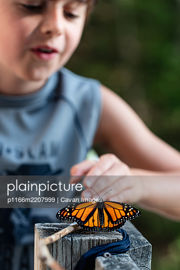 Young boy looking at a monarch butterfly resting on a deck railing. - p1166m2207999 by Cavan Images