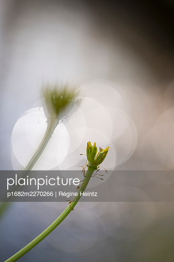 Wild flower without petals, circles of light in the background - p1682m2270266 by Régine Heintz