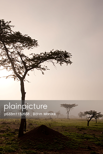 Morgennebel in der Masai Mara - p533m1152658 von Böhm Monika