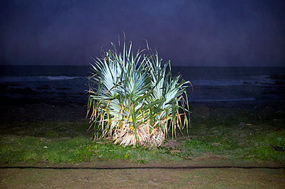 Bush near seashore at night - p1125m2013962 by jonlove