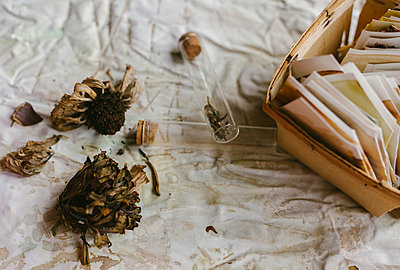 Flat lay of zinnia flower heads for seed saving with a basket of seed envelopes and glass bottle holder - p1166m2255460 by Cavan Images