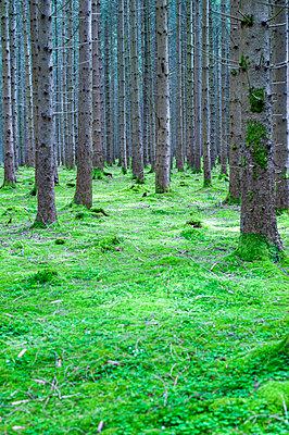 Wald mit Moos - p1466m2289421 von Stefanie Giesder