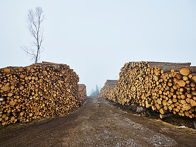 Piles of logs along dirt track - p312m1113965f by Jan Tove
