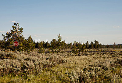 Stop sign amongst trees and grass, Grand Teton National Park, Wyoming, USA - p924m700305 by Samantha Mitchell