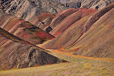 Atacama desert in bloom through El Niño - p719m1131806 by Rudi Sebastian