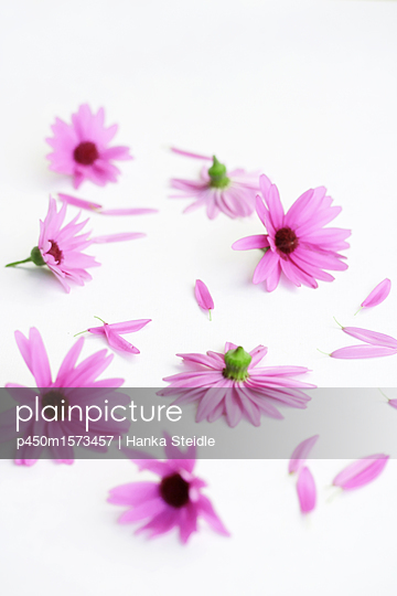 Blüten   - p450m1573457 von Hanka Steidle
