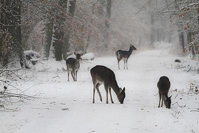Hirsche im Stadtwald - p417m778720 von Pat Meise