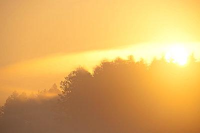 Sonnenaufgang im Morgennebel - p533m1525212 von Böhm Monika