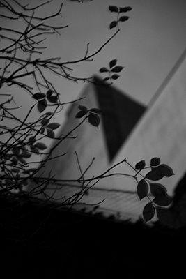 dunkle blaetter vor hausfassade - p6270045 von bobsairport