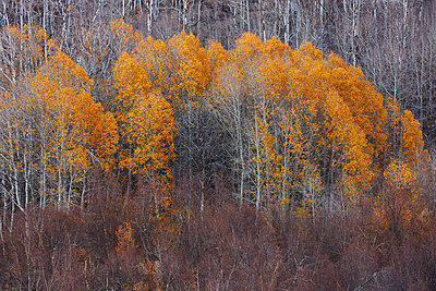 Autumn forest in the Sierra Nevada - p719m1511399 by Rudi Sebastian