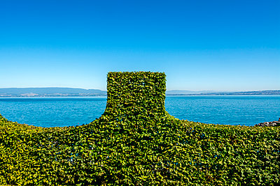 Hedge in water front - p813m1172542 by B.Jaubert