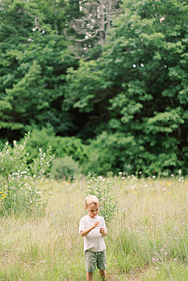 Little boy admiring the wildflowers of New England. - p1166m2151851 by Cavan Images