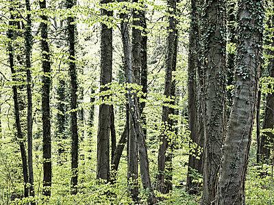 Frühlingswald - p536m886970 von Schiesswohl