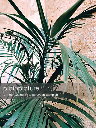 Indoor plant - p1150m2228811 by Elise Ortiou Campion