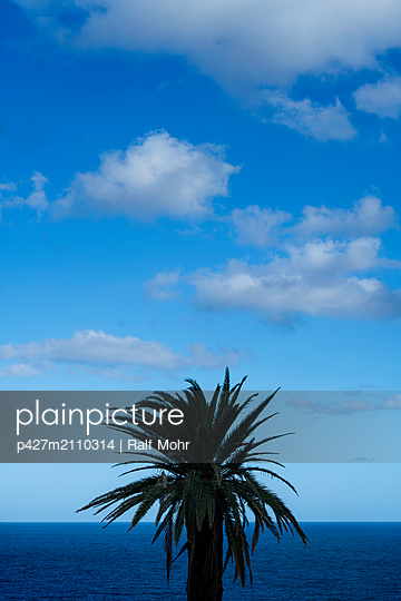 Palm tree - p427m2110314 by Ralf Mohr
