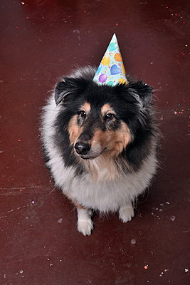 Party dog - p148m2111283 by Axel Biewer