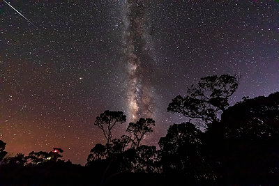 USA, Hawaii, Koke'e State Park, Milky way and trees at night - p300m2083464 by Fotofeeling