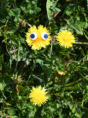 Yellow flower with artificial eyes - p1229m2272866 by noa-mar