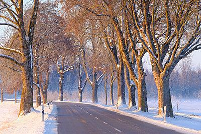 Germany, Gebrazhofen, treelined county road in winter - p300m1228149 by Martin Siepmann